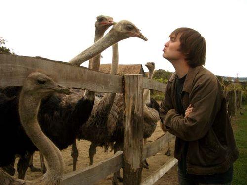 Kissing_ostriches_in_romani