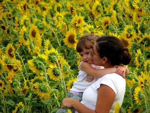 Sunflower_fields_forever