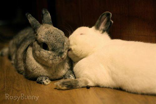 Bunny_love_rosybunny