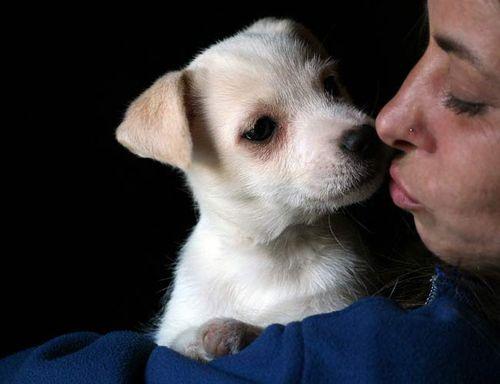 Sweet_puppy_breath