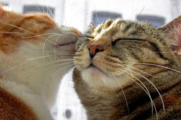 Kitty_kiss_on_the_cheek